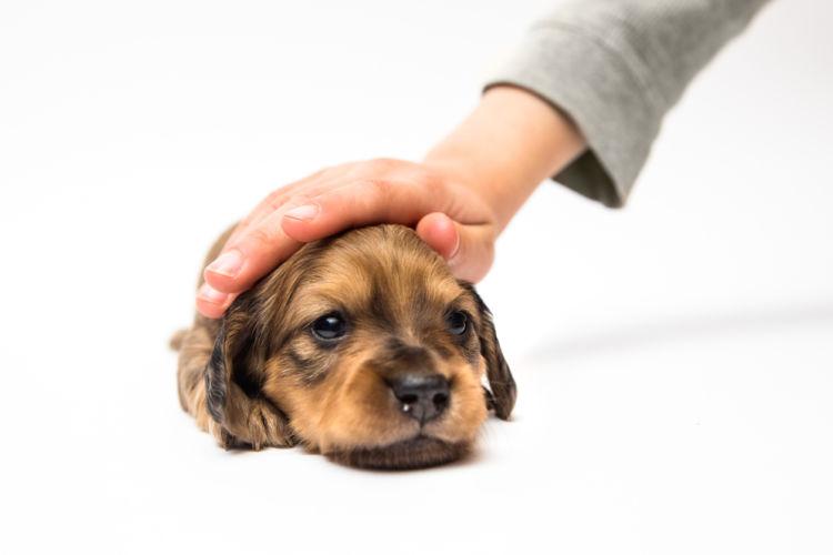 「犬を撫でる」まとめ