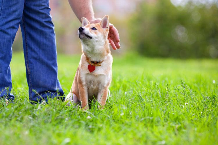 犬を撫でることで深まる絆