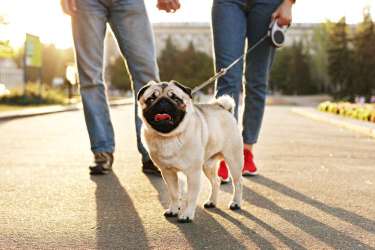 犬の夜泣きを防ぐための散歩