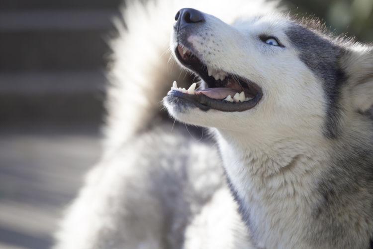 【獣医師監修】犬の夜鳴き(夜泣き)の原因や理由は!?子犬・成犬・老犬の夜鳴き対策は?