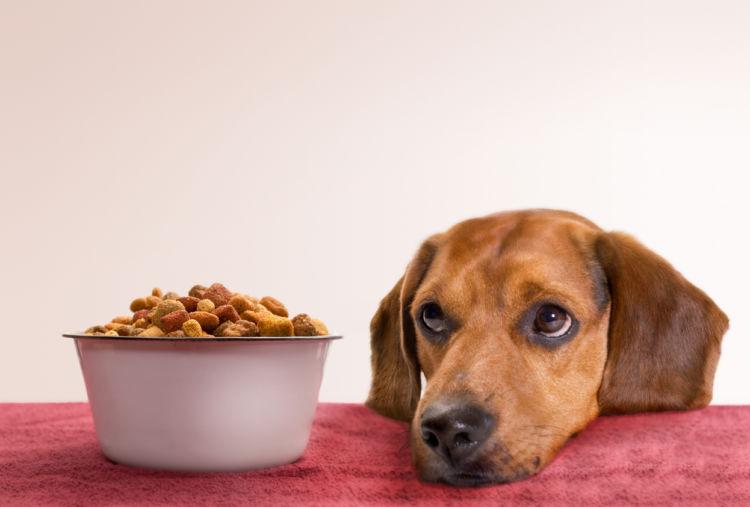 【獣医師監修】「ペットフードの基礎知識③」 ドッグフードの種類や選び方、注意点は?