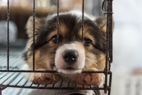 愛犬がケージに入ることを嫌がる!克服のための3つのヒント
