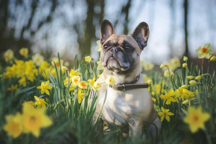 犬が食べてはいけない草の種類は?