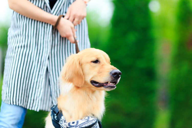 犬の散歩中の「引っ張り癖」【直し方】①~飼い主が方向転換をして散歩をリードする