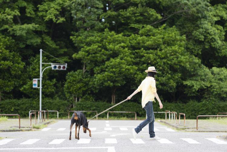 犬の引っ張り癖の直し方