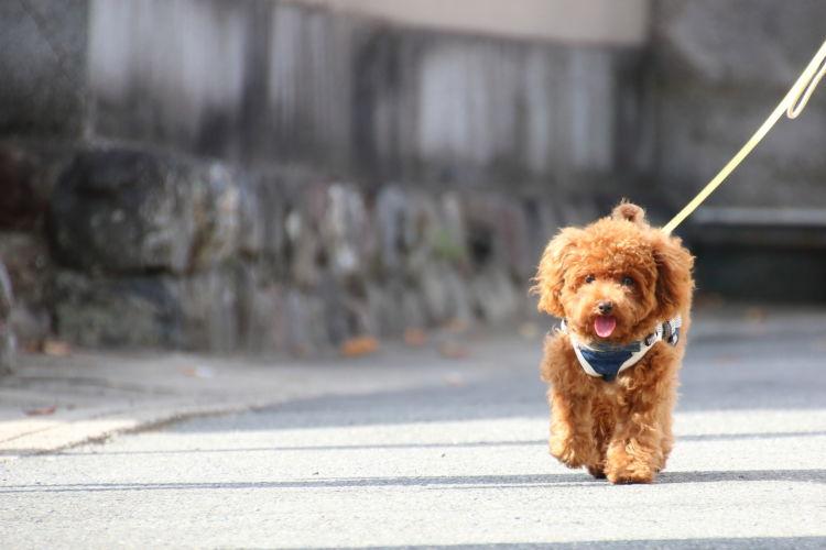 犬の散歩中の「引っ張り癖」【直し方】②~ 壁沿いを散歩する