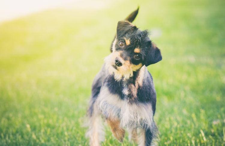 犬が首をかしげる理由②【いつもの音や声と違う】