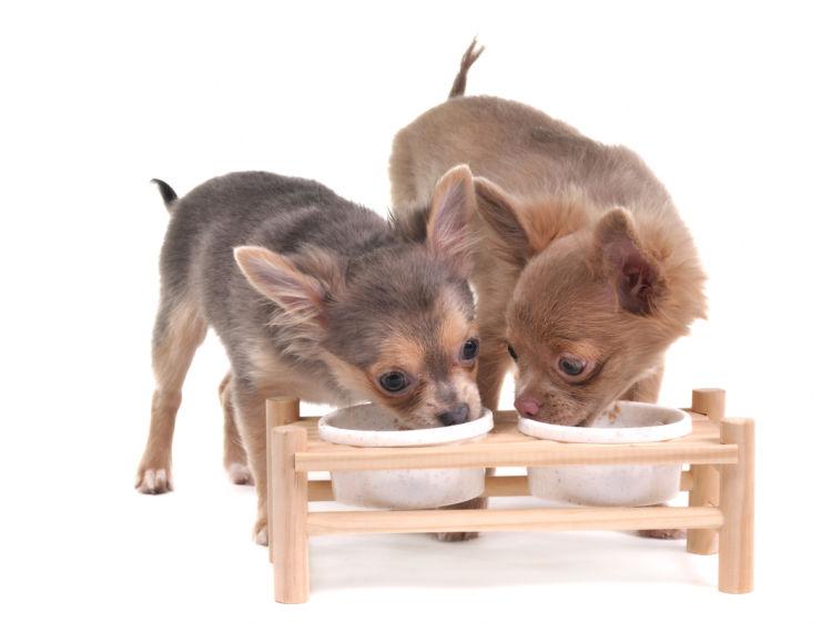 犬同士の喧嘩(多頭飼い)④【喧嘩を防ぐには?】ご飯を並べて置かない!
