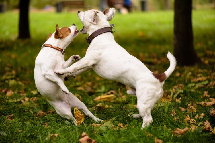 犬同士の喧嘩(多頭飼い)⑤【激しい喧嘩】怪我の恐れがある場合