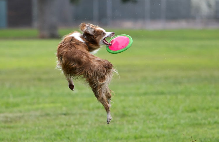 犬同士の喧嘩(多頭飼い)⑥【喧嘩の制止】ストレス発散が大事!