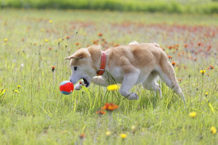 常日頃から運動する犬