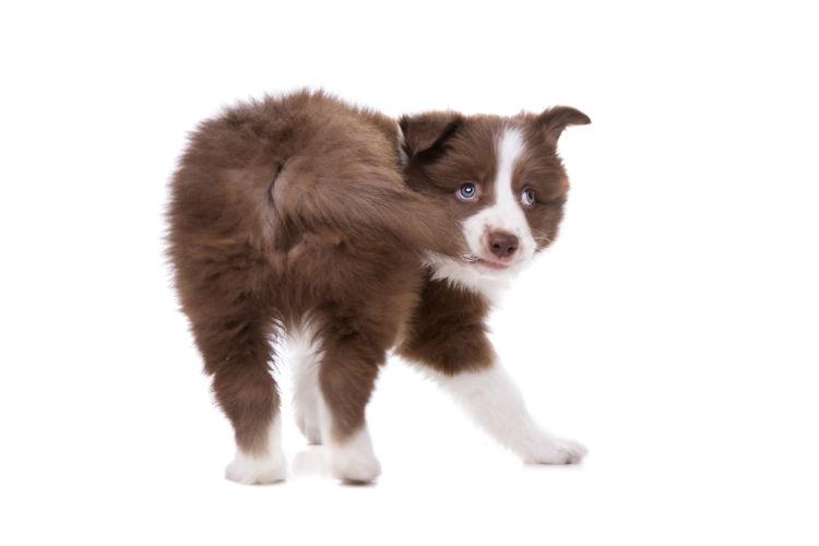 犬がしっぽを追いかけ回転する「原因」「理由」①【遊び】