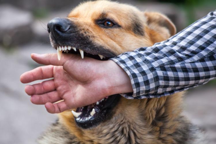 素手を噛む犬