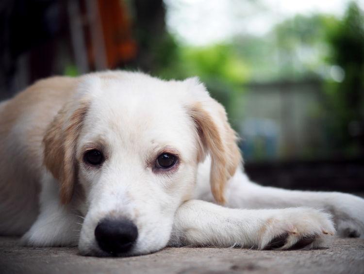 退屈な子犬