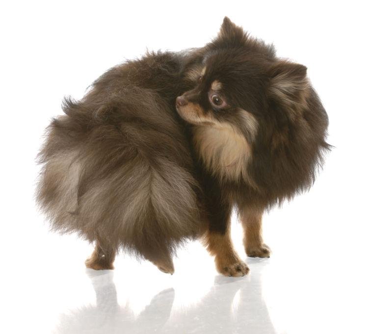 犬がしっぽを追いかけ回転する「原因」「理由」②【ストレス】