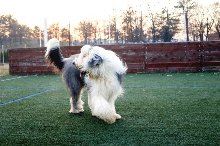 犬がしっぽを追いかけ回転する「原因」「理由」⑤【常同障害】
