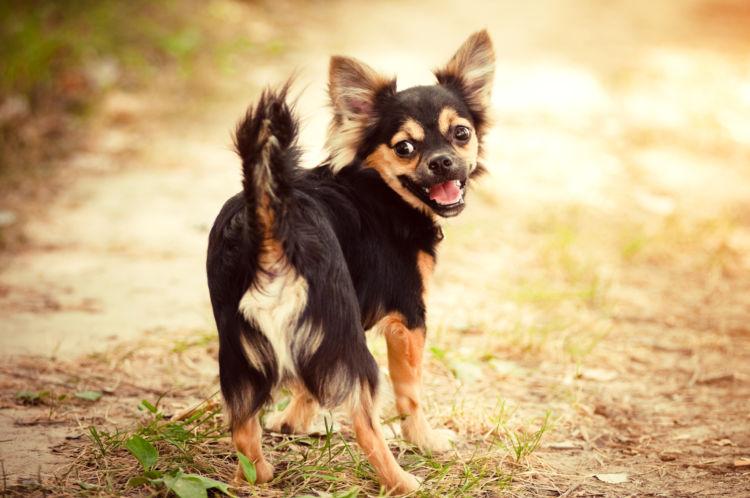 犬がしっぽを追いかけ回転する【行動改善】するには?