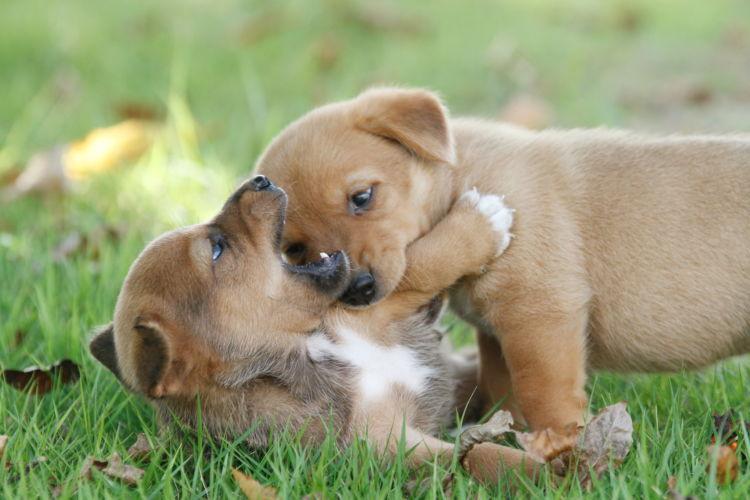 【獣医師監修】「喧嘩!?」「遊び!?」唸り・吠える 犬同士の喧嘩とじゃれ合いの区別は?