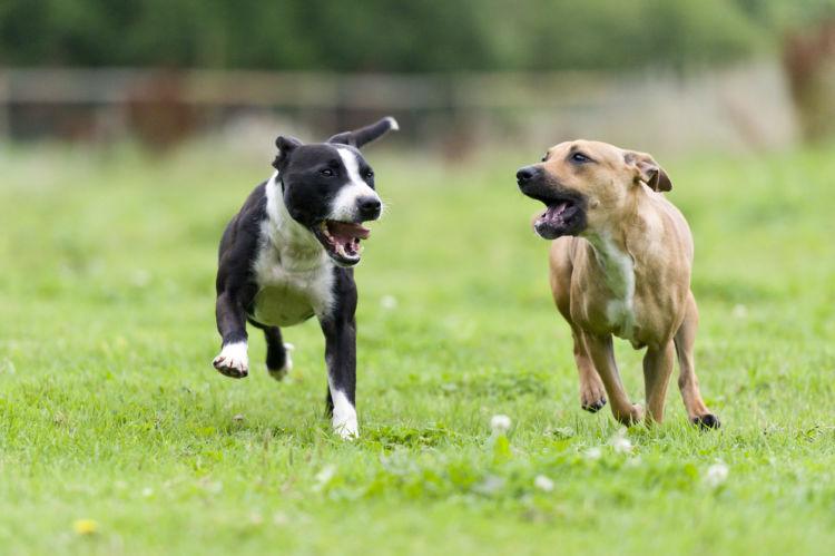 犬の「喧嘩」と「遊び」区別の仕方③【始まり方に注意!】