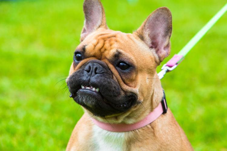 犬の鳴き声④【威嚇】しているとき