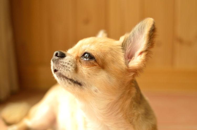 犬は、悲しいから涙を流すわけではない!?