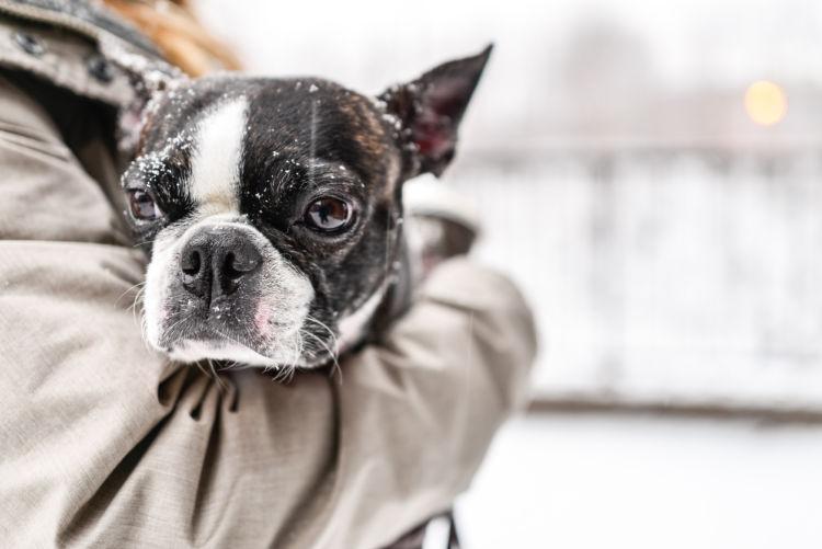 「犬が震える」原因と理由・対策①【寒さ】