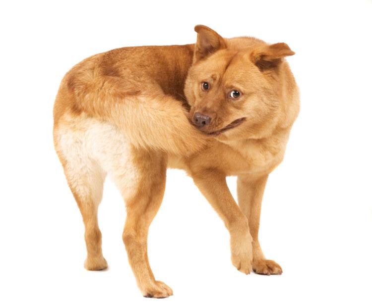犬がしっぽを追いかける【こんな症状は要注意!】