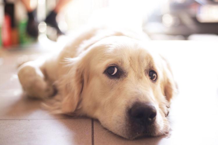 【獣医師監修】犬のストレスサイン対処法!「カーミングシグナル」は愛犬からのSOS!?
