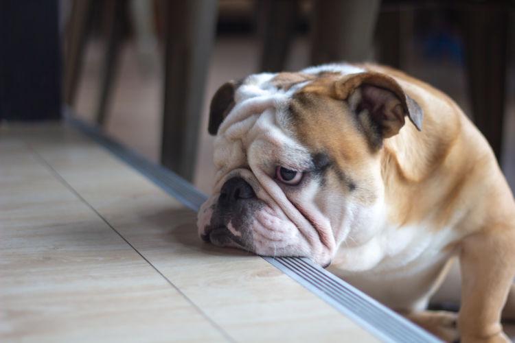 犬のストレスの原因(一例)