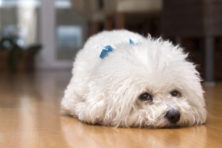 犬のストレス③【ストレスサインの対処法!】
