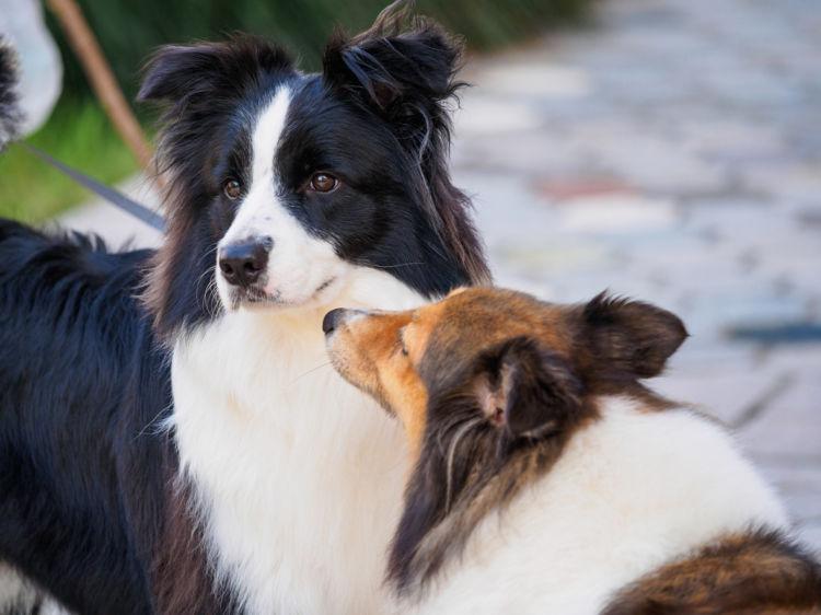 散歩で他の犬とすれ違うときに目をそらす