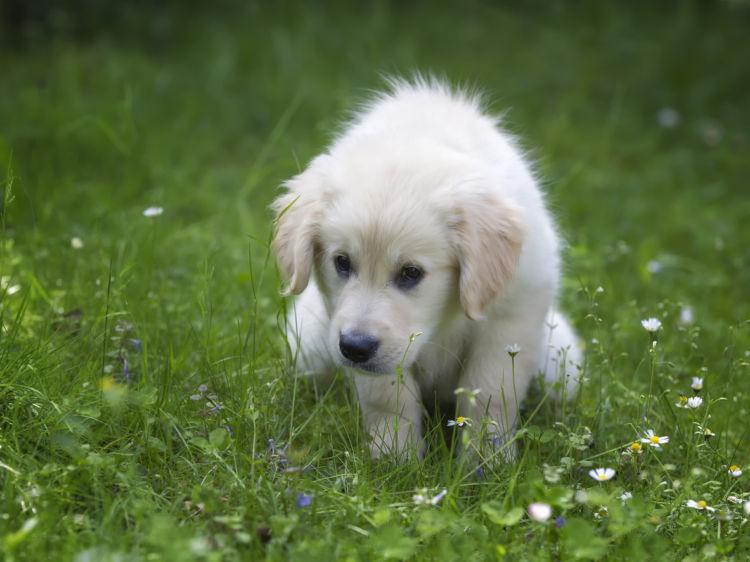 犬のおなら【下痢を伴う原因】病気の可能性あり!