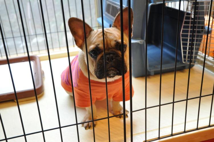 「犬のケージの設置場所」【トイレと一緒?】