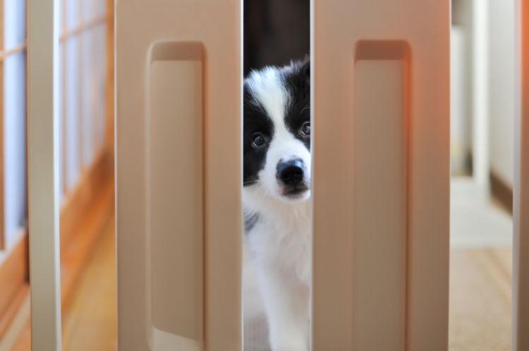 「犬のケージ(サークル)の設置場所」【5つの工夫!】