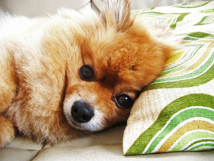 犬の臭い対策③「ソファー・クッション・カーテン」を掃除する!