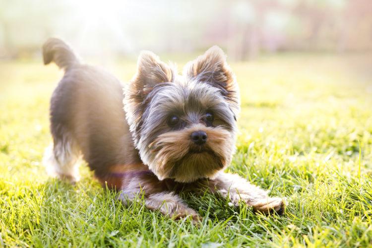 「犬の臭い」【健康】【清潔】に保つ!