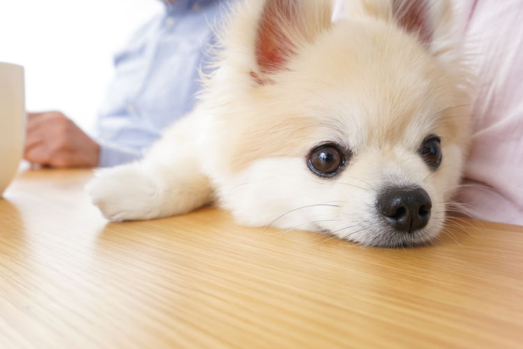 「犬の臭い」【まとめ】