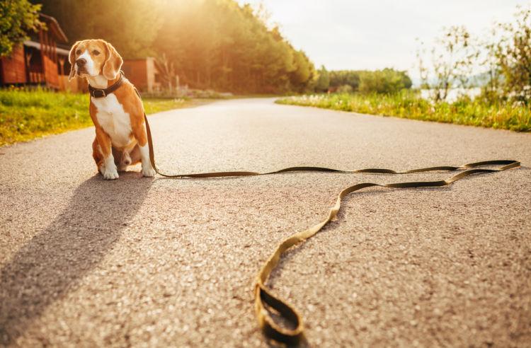 「犬が散歩で歩かない」【原因】【理由】