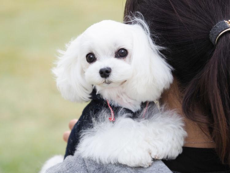 「犬が散歩で歩かない」【抱っこ】をやめる