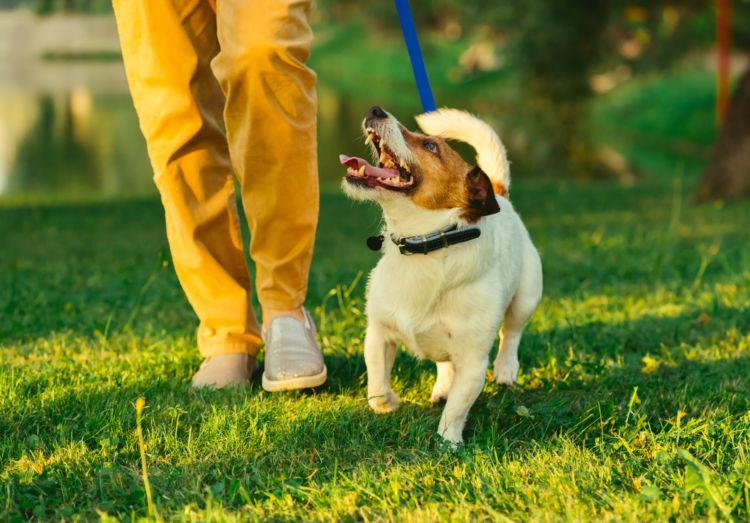 「犬が散歩で歩かない」【まとめ】