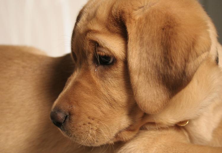 「犬の涙や目やに」【涙が増える原因】