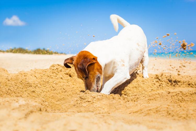 【獣医師監修】なぜ犬は穴を掘るのか?犬が穴掘り行動する理由や止めさせるための防止対策!