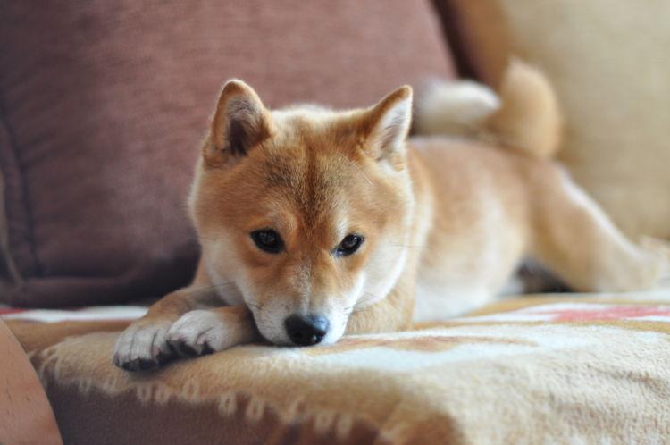犬の穴掘り行動【理由②】「寝床づくり」「暇つぶし」