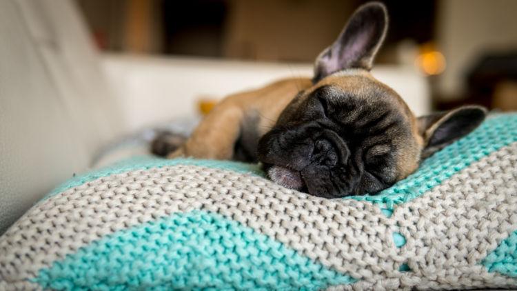 くるくると回ってから寝る犬