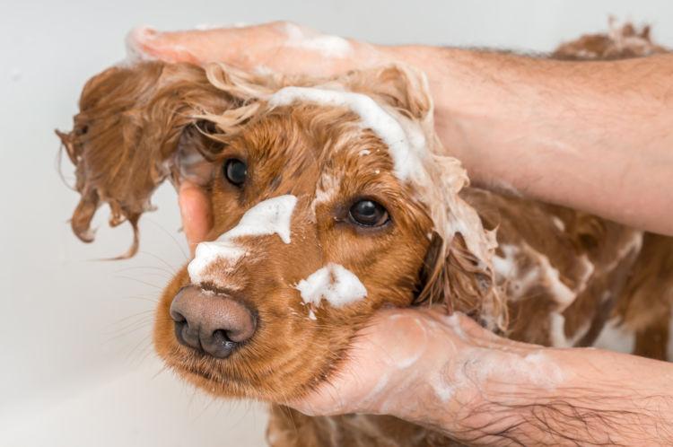 犬の膿皮症【再発】【予防】