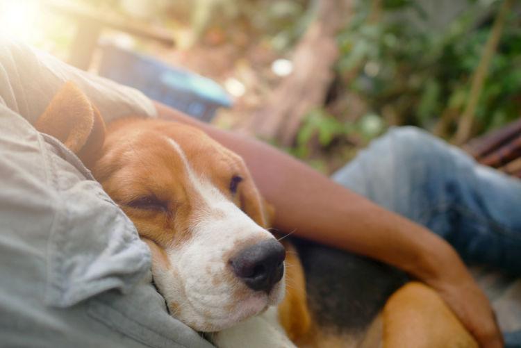 犬の膿皮症の予防