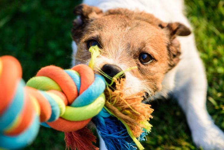 犬が唸り(うなり)始めた時の対策②【くわえたものを放す訓練】