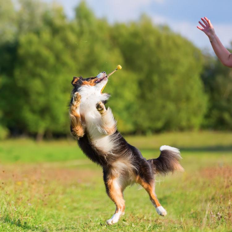 おもちゃを犬に投げる
