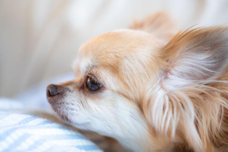 犬の目に入ったゴミや毛【綿棒】【ペーパータオル】【ティッシュ】は使用しない!