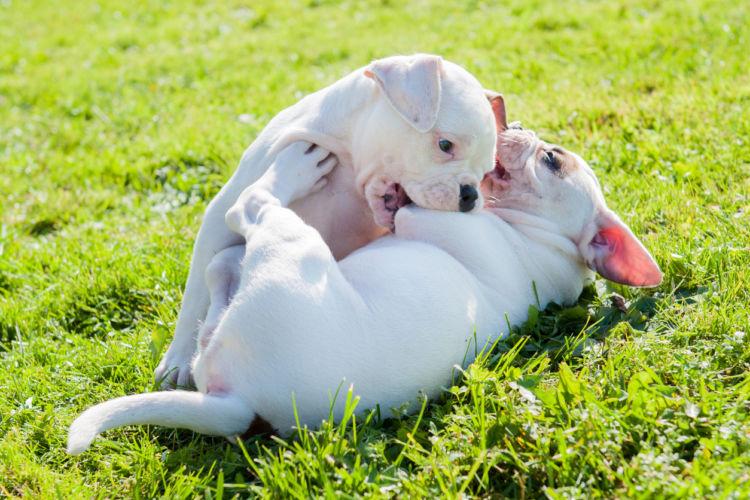犬が飼い主を噛む【原因・理由②】「本能」